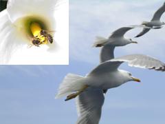 Birds & Bees